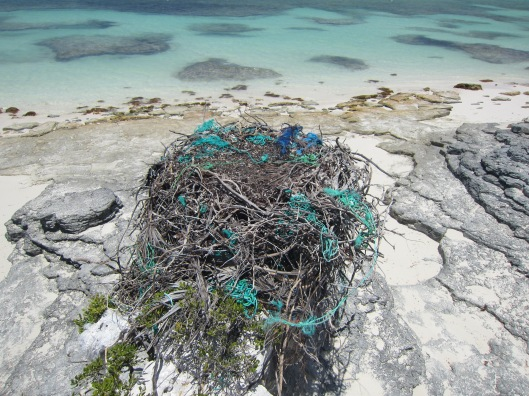Osprey Nest With Plastic Rope on the Beach