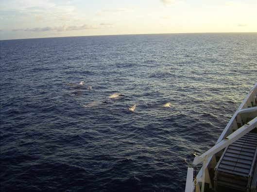 Dolphins Seen From Maxim Gorkiy