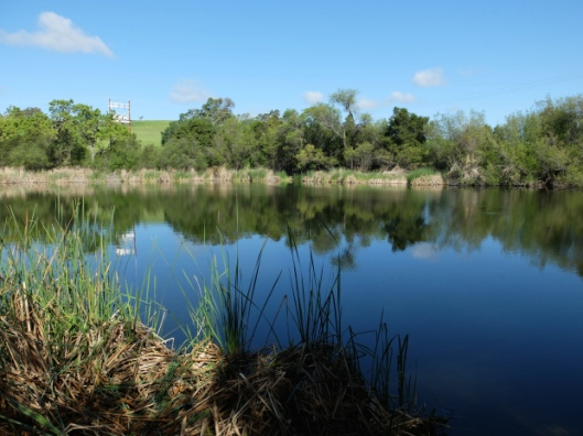 Arastradero Lake Wandering With Purpose